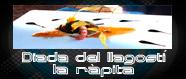13a. Diada del LLagostí
