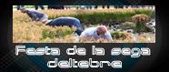 Festa de la sega a Deltebre